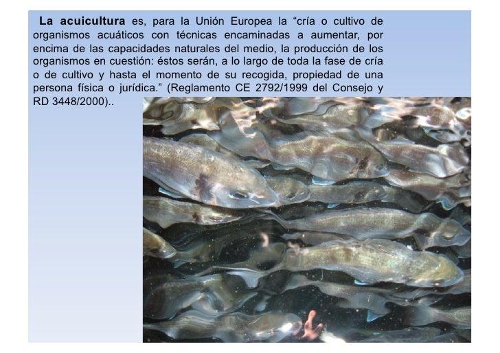 """La acuicultura es, para la Unión Europea la """"cría o cultivo de organismos acuáticos con técnicas encaminadas a aumentar, p..."""