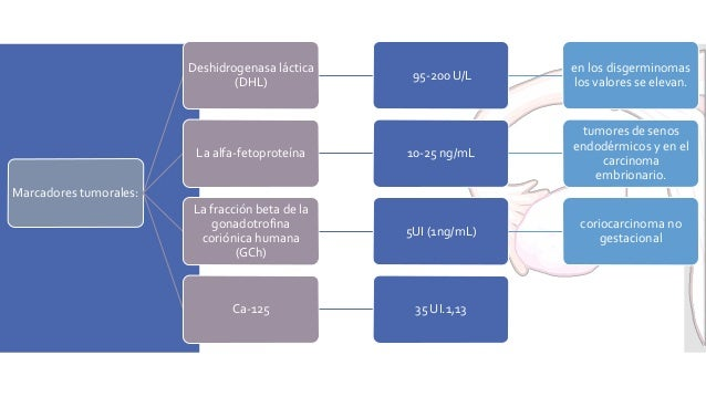 Clasificación de losTumores del Estroma Gonadal: Se clasifican en dos subtipos: • Tipo adulto: Se presentan en mujeres de ...