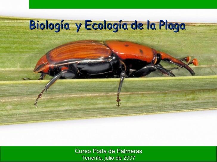 Biología  y Ecología de la Plaga   Curso Poda de Palmeras Tenerife, julio de 2007