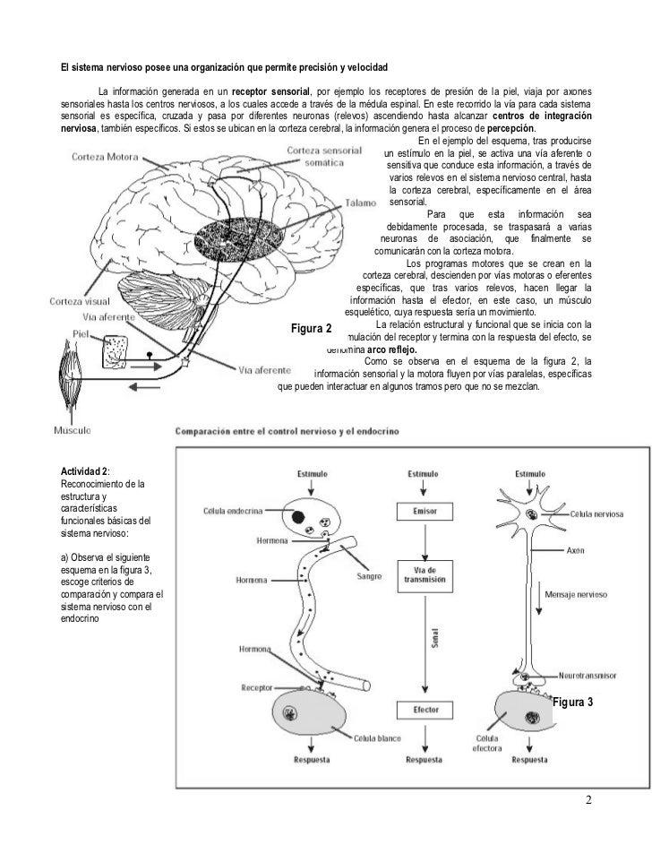 Biología tercero medio