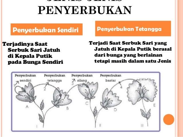 Download 47 Gambar Bunga Kembang Sepatu Beserta Cara Penyerbukannya Paling Keren