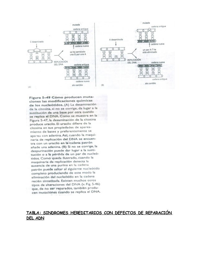 REPARACION DEL DNA