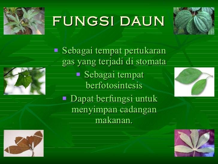 Biologi struktur dan fungsi jaringan tumbuhan