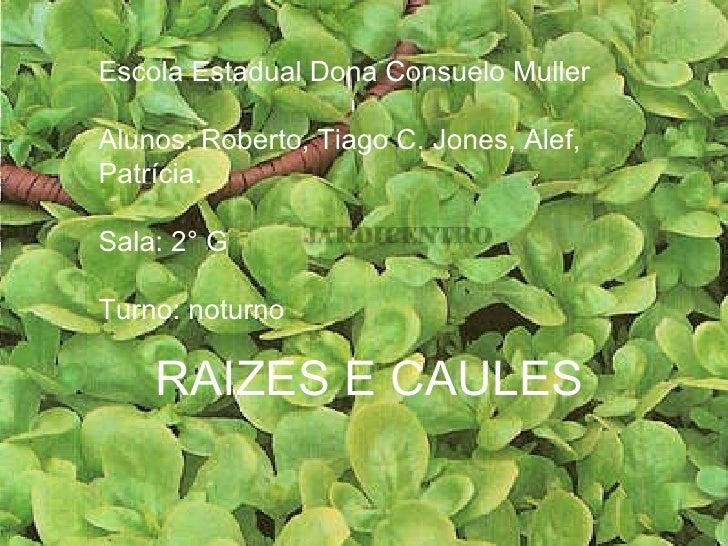 RAIZES E CAULES Escola Estadual Dona Consuelo Muller Alunos: Roberto, Tiago C. Jones, Alef, Patrícia.  Sala: 2° G  Turno: ...
