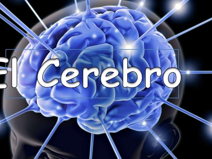 Introducción• A continuación a través de la presente  explosión les daremos a conocer la histología  y fisiología del cere...