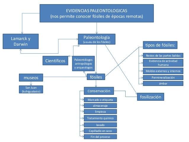 EVIDENCIAS PALEONTOLOGICAS                         (nos permite conocer fósiles de épocas remotas)Lamarck y               ...