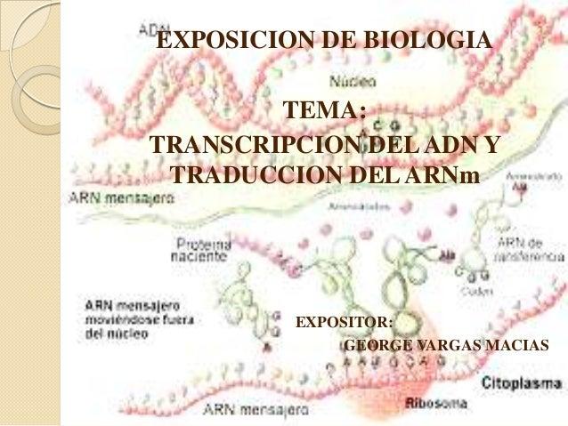 EXPOSICION DE BIOLOGIA  TEMA: TRANSCRIPCION DEL ADN Y TRADUCCION DEL ARNm  EXPOSITOR: GEORGE VARGAS MACIAS