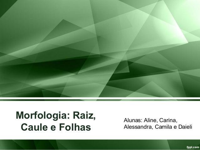Morfologia: Raiz, Caule e Folhas Alunas: Aline, Carina, Alessandra, Camila e Daieli