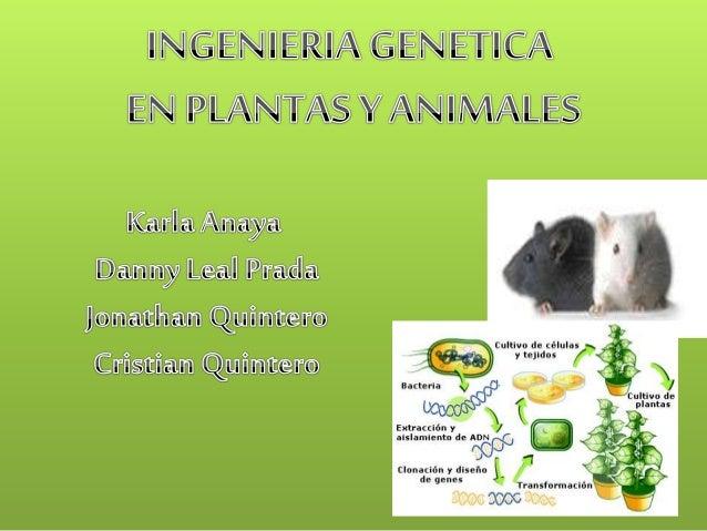 ¿ QUE ES LA INGENIERIA GENETICA EN PLANTAS Y  ANIMALES?  Consiste en la manipulación del material  genético de células veg...