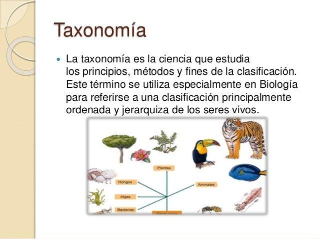 Biologia for Taxonomia de la jirafa