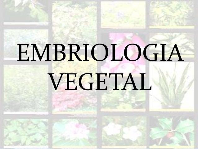 EMBRIOLOGIA VEGETAL