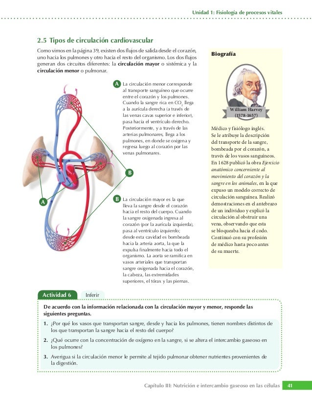 remedio natural bajar acido urico tratamiento para calculo renal de acido urico dieta para baixar acido urico alto