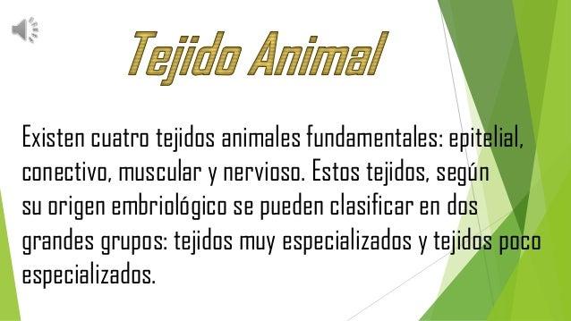 Biologia Tejidos Animales Y Vegetales