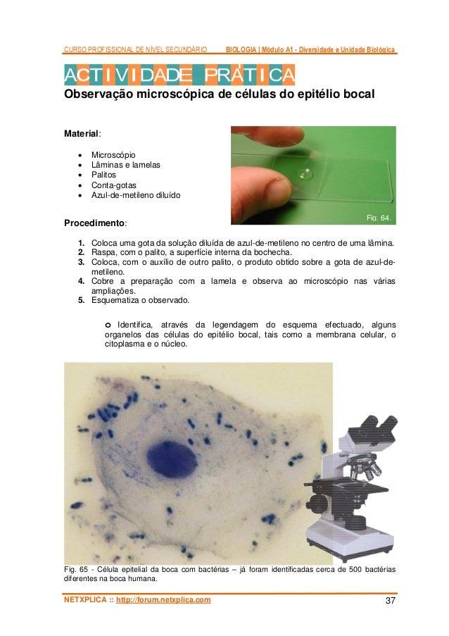 Tratamentos de um fungo em pregos de pernas de um aloés