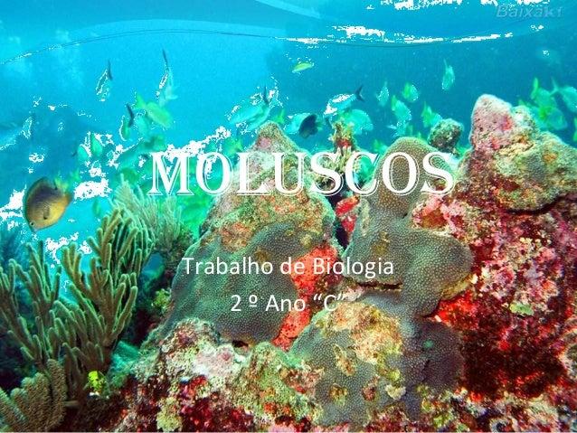 "MoluscosTrabalho de Biologia2 º Ano ""C"""