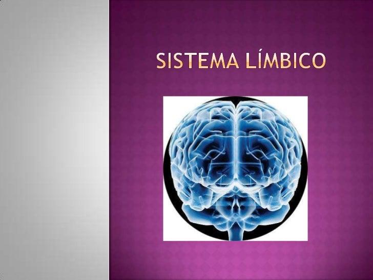 Sistema límbico<br />