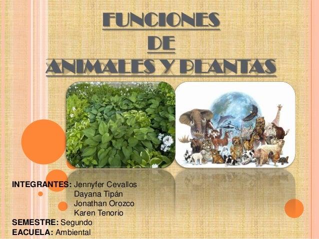 FUNCIONES DE ANIMALES Y PLANTAS  INTEGRANTES: Jennyfer Cevallos Dayana Tipán Jonathan Orozco Karen Tenorio SEMESTRE: Segun...