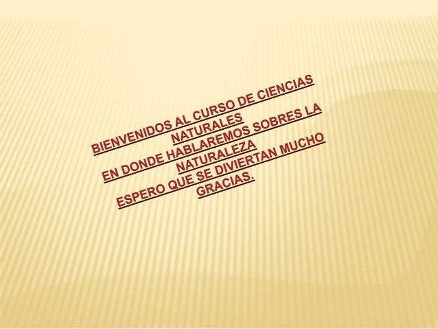 INDICEEL AIRELAS PLANTASLOS ANIMALESEL SUELOSERES INERTESEL AGUAACTIVIDADESGLOSARIO