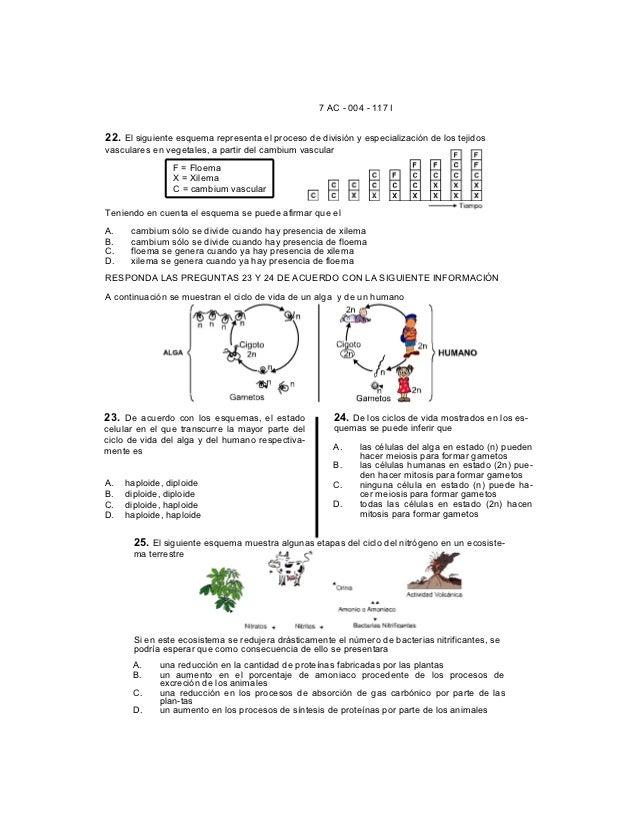 7 AC - 004 - 117 I22. El siguiente esquema representa el proceso de división y especialización de los tejidosvasculares en...