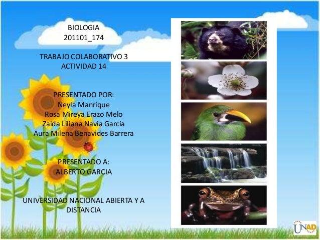 BIOLOGIA201101_174TRABAJO COLABORATIVO 3ACTIVIDAD 14PRESENTADO POR:Neyla ManriqueRosa Mireya Erazo MeloZaida Liliana Navia...