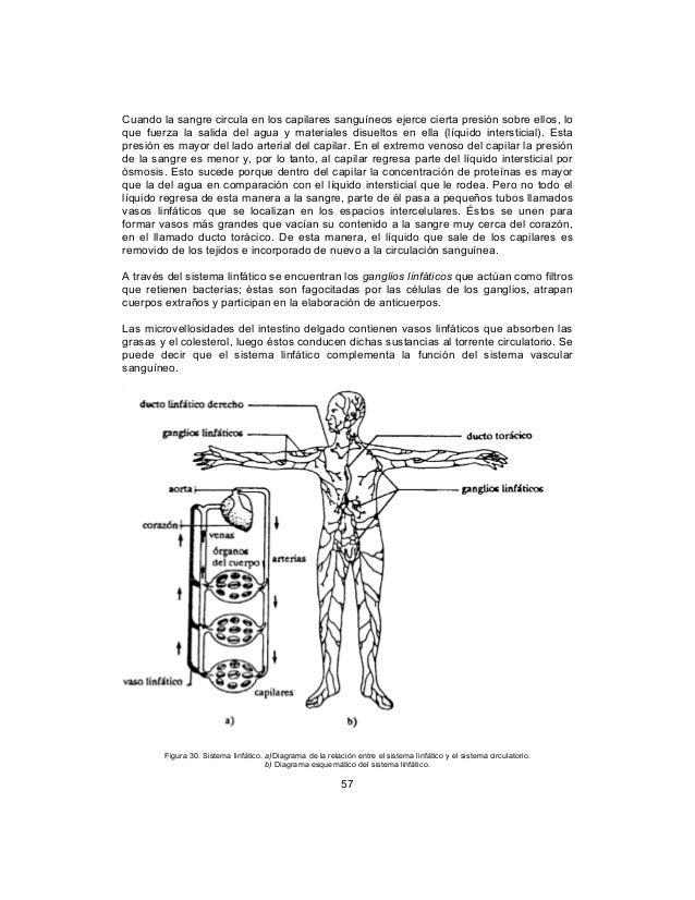 Asombroso Sistema Linfático Diagrama Fotos - Anatomía de Las ...