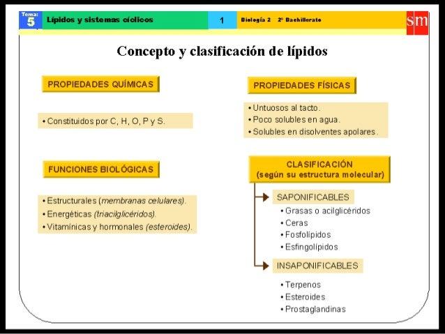 Lipiclos y sistemas ciclicos  Biologia 2 2° Baehilleraîo  Concepto y clasificaciòn de lipidos  PROPIEDADES QUÎMICAS ì  o C...