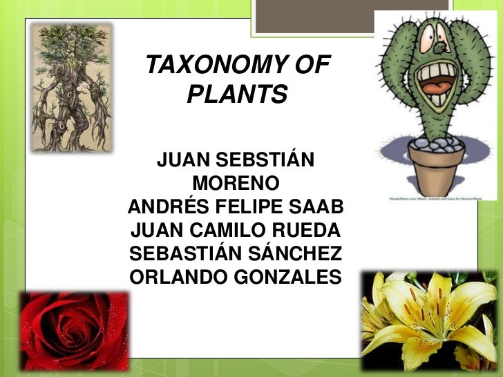 TAXONOMY OF PLANTS<br />JUAN SEBSTIÁN MORENO<br />ANDRÉS FELIPE SAAB<br />JUAN CAMILO RUEDA<br />SEBASTIÁN SÁNCHEZ<br />OR...