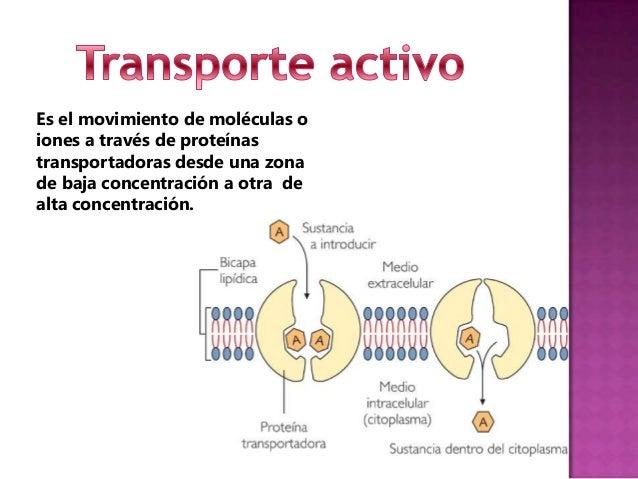 Es el mecanismo que permite el ingreso osalida de sustanciaa través de la membrana plasmática.