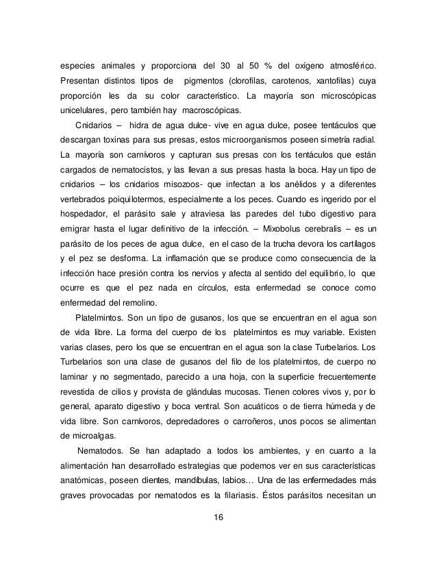 Moderno Peces óseos Hoja De Cálculo De La Anatomía Molde - Imágenes ...