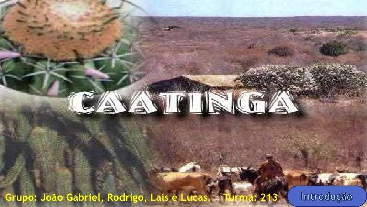 Grupo: João Gabriel, Rodrigo, Lais e Lucas.   Turma: 213