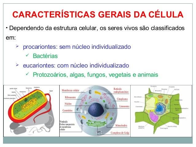 Biologia Celular 8 Ano
