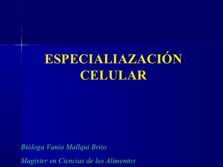 ESPECIALIAZACIÓN           CELULARBióloga Vania Mallqui BritoMagister en Ciencias de los Alimentos
