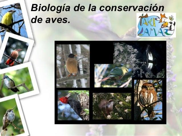 Biología de la conservación de aves.