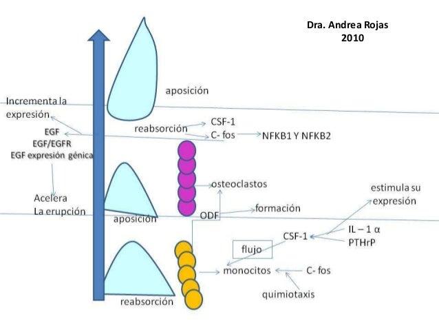 Dra. Andrea Rojas 2010