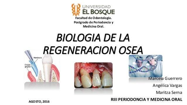 BIOLOGIA DE LA REGENERACION OSEA Marcela Guerrero Angélica Vargas Maritza Serna RIII PERIODONCIA Y MEDICINA ORAL Facultad ...