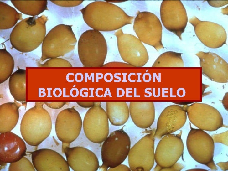COMPOSICIÓN BIOLÓGICA DEL SUELO