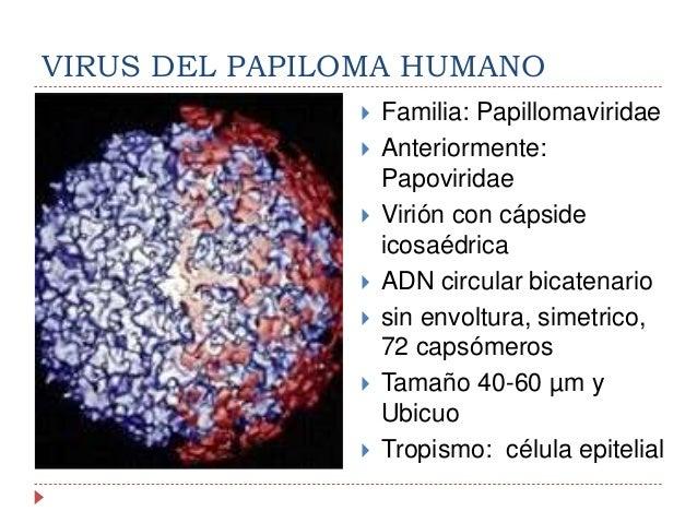 Biolog a del virus del papiloma humano for Ph piscina bajo consecuencias