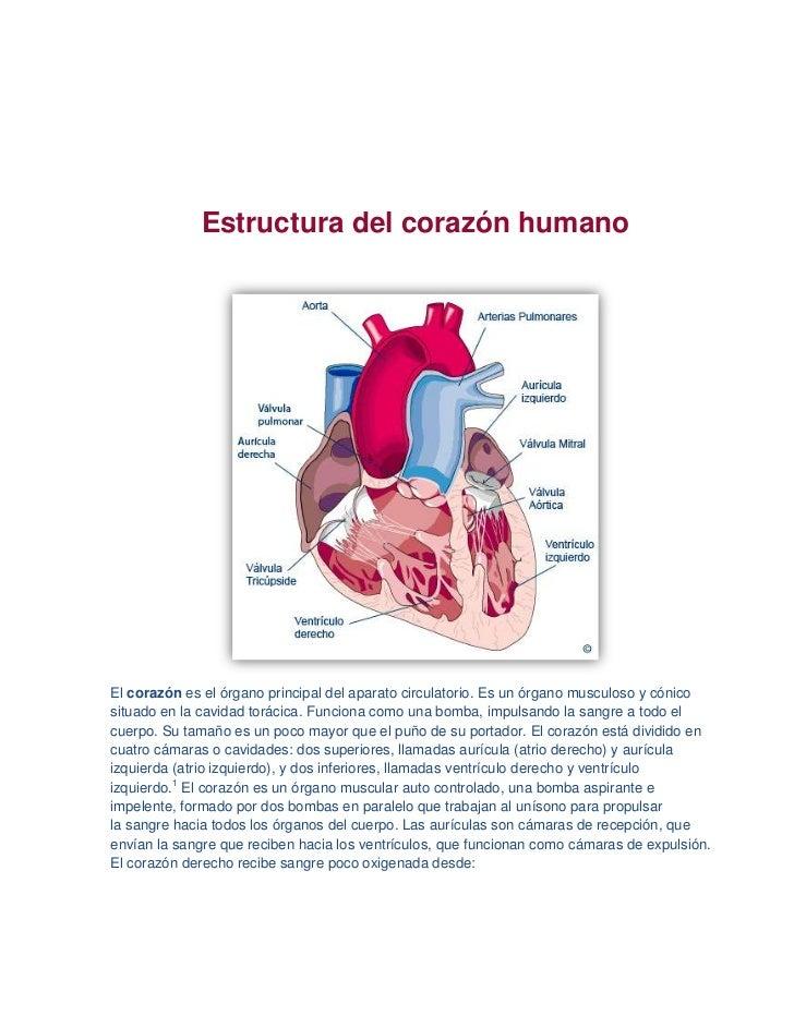 Biologia(diseccion del corazon)