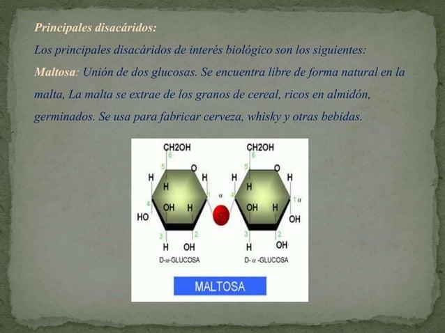 Lactosa : Formado por glucosa y una galactosa o azúcar de la leche: Se encuentra libre en la leche de los mamíferos.