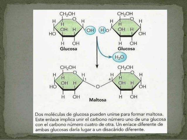 Amilo pectina es una molécula ramificada y la mas frecuente. -Están unidos entre sí por enlaces glucosidicos (1-6) Las cél...
