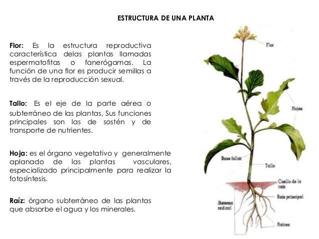 Anatomía de las plantas (Biología).