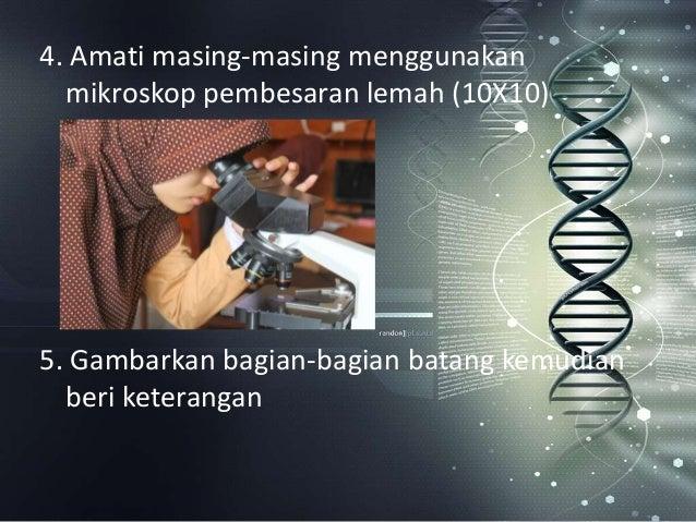 Biologi aktivitas ilmiah kelompok xi mipa