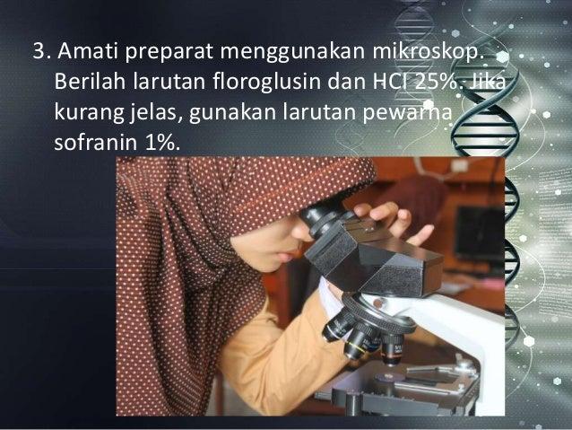 Mengenal mikroskop lebih dekat kaskus