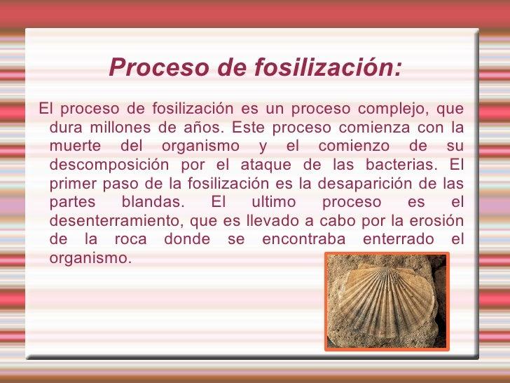 Los fósiles. Slide 3