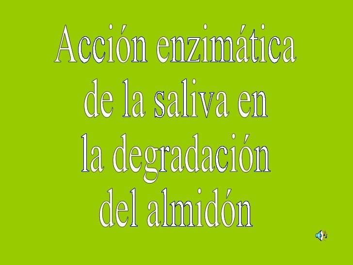 Acción enzimática de la saliva en  la degradación del almidón