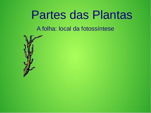 Partes das Plantas A folha: local da fotossíntese