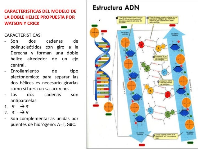 Biologia Molecular Dna