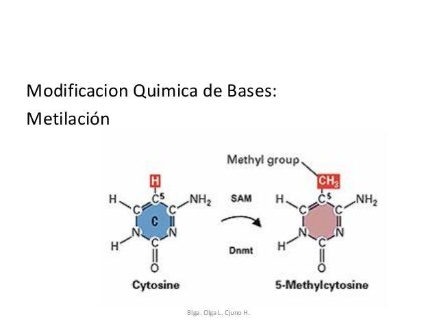 Biologia Molecular Reparac