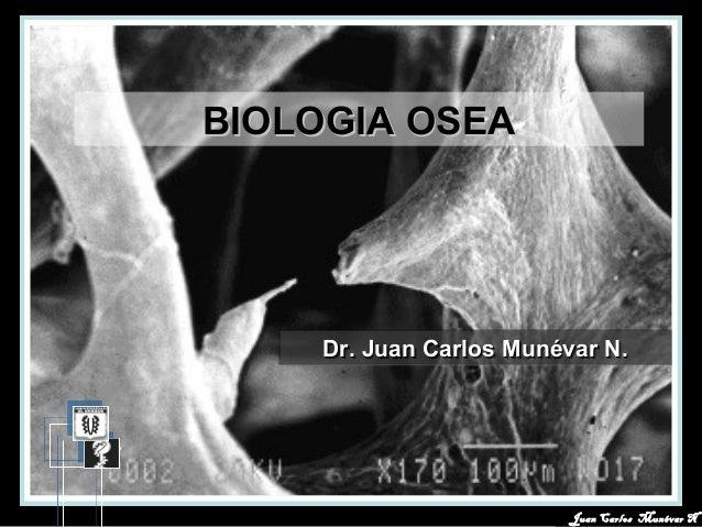 Juan Carlos Munévar NJuan Carlos Munévar N BIOLOGIA OSEABIOLOGIA OSEA Dr. Juan Carlos Munévar N.Dr. Juan Carlos Munévar N....