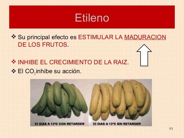 Etileno Su principal efecto es ESTIMULAR LA MADURACION  DE LOS FRUTOS. INHIBE EL CRECIMIENTO DE LA RAIZ. El CO2 inhibe ...